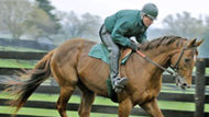 Homestretch: Racehorse Rescue