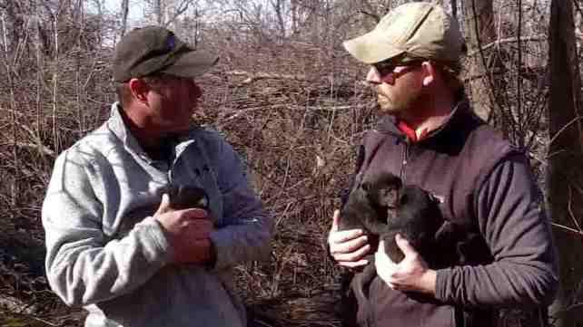 Black Bears in Harlan County
