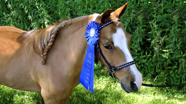 Kentucky's 225th Anniversary and Re-training Retired Racehorses!