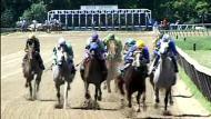 Saddles and Silks: A Jockey