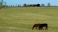 Beyond the Stone Fences: Horse Farms of the Bluegrass