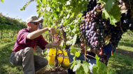 Thrive: The Kentucky Wine Tradition