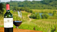 Vintage Kentucky: The Vine to Wine Experience