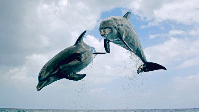Dolphins: Spy in the Pod, Part 1