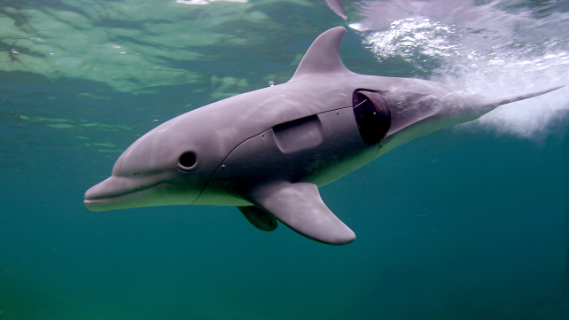 Dolphins: Spy in the Pod, Part 2