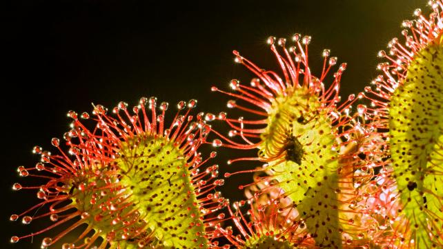 Plants Behaving Badly: Murder & Mayhem