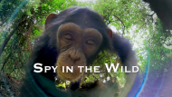 Spy in the Wild, A Nature Miniseries